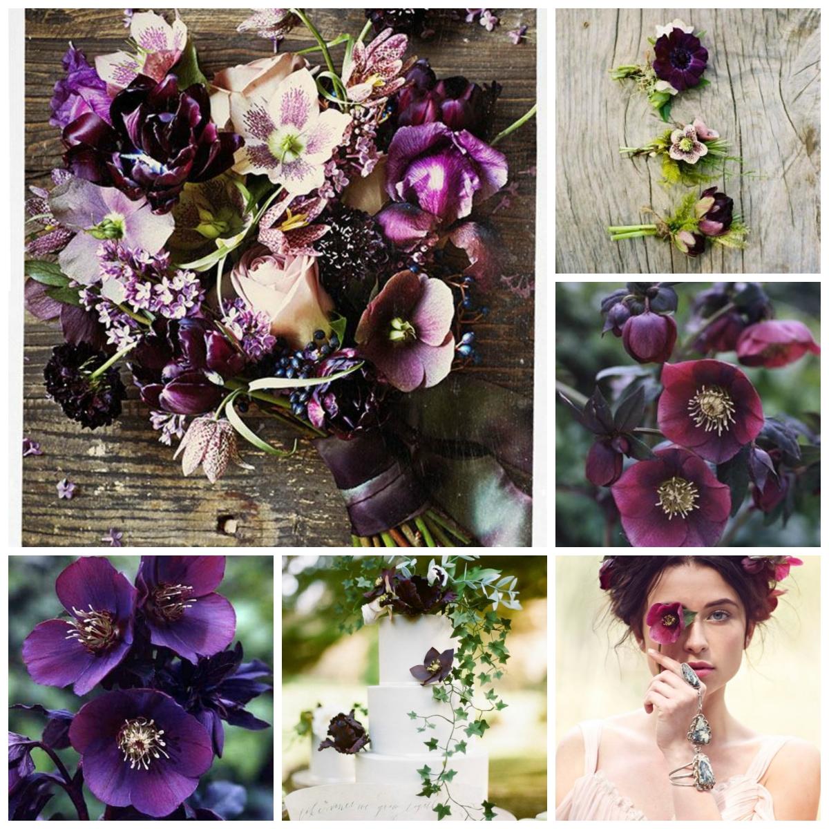 Wedding Flowers In Season In January : Seasonal wedding flowers jan march whisper and blush