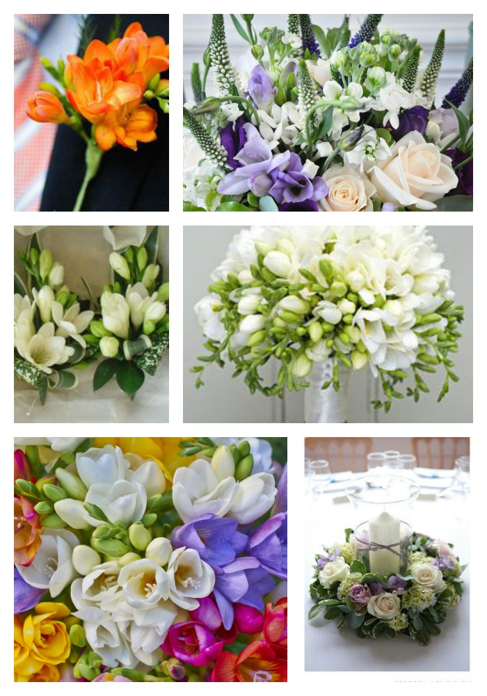 Freesia wedding flowers summer wedding flowers