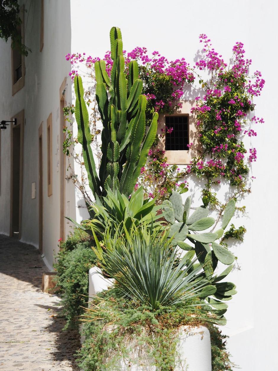 Ibiza Town Cactus Street View